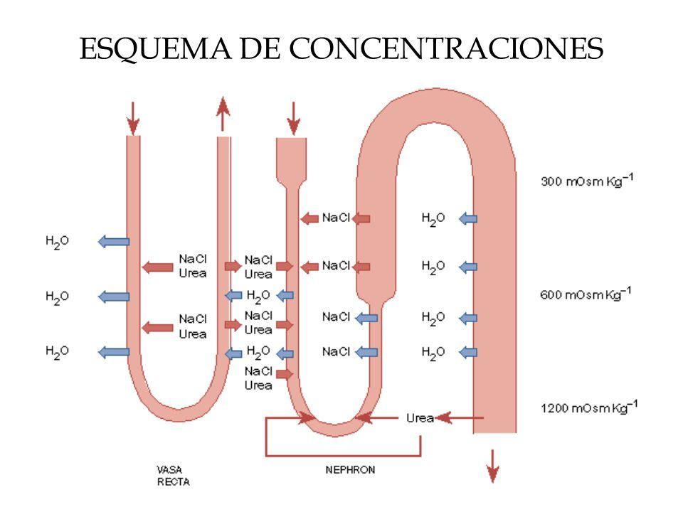 ESQUEMA DE CONCENTRACIONES