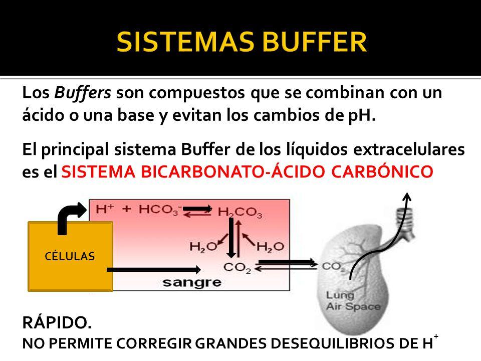 Los Buffers son compuestos que se combinan con un ácido o una base y evitan los cambios de pH.