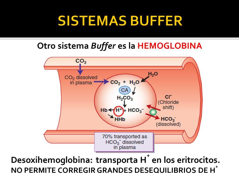 Otro sistema Buffer es la HEMOGLOBINA Desoxihemoglobina: transporta H + en los eritrocitos.