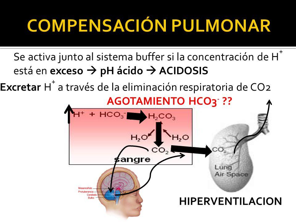 Se activa junto al sistema buffer si la concentración de H + está en exceso  pH ácido  ACIDOSIS Excretar H + a través de la eliminación respiratoria de CO2 HIPERVENTILACION AGOTAMIENTO HCO3 - ??