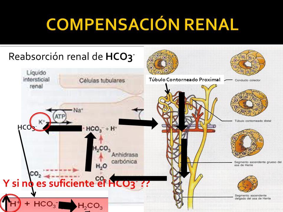 Reabsorción renal de HCO3 - HCO3 - Túbulo Contorneado Proximal Y si no es suficiente el HCO3 - ??