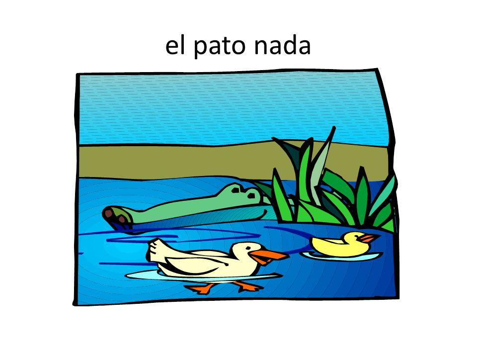 el pato nada