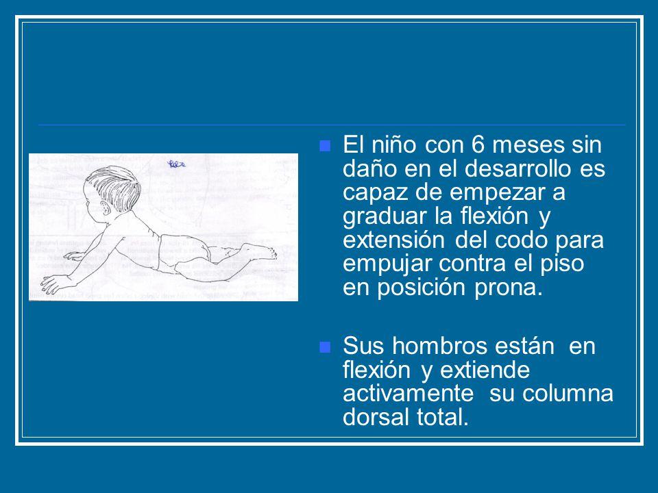 El niño con 6 meses sin daño en el desarrollo es capaz de empezar a graduar la flexión y extensión del codo para empujar contra el piso en posición pr