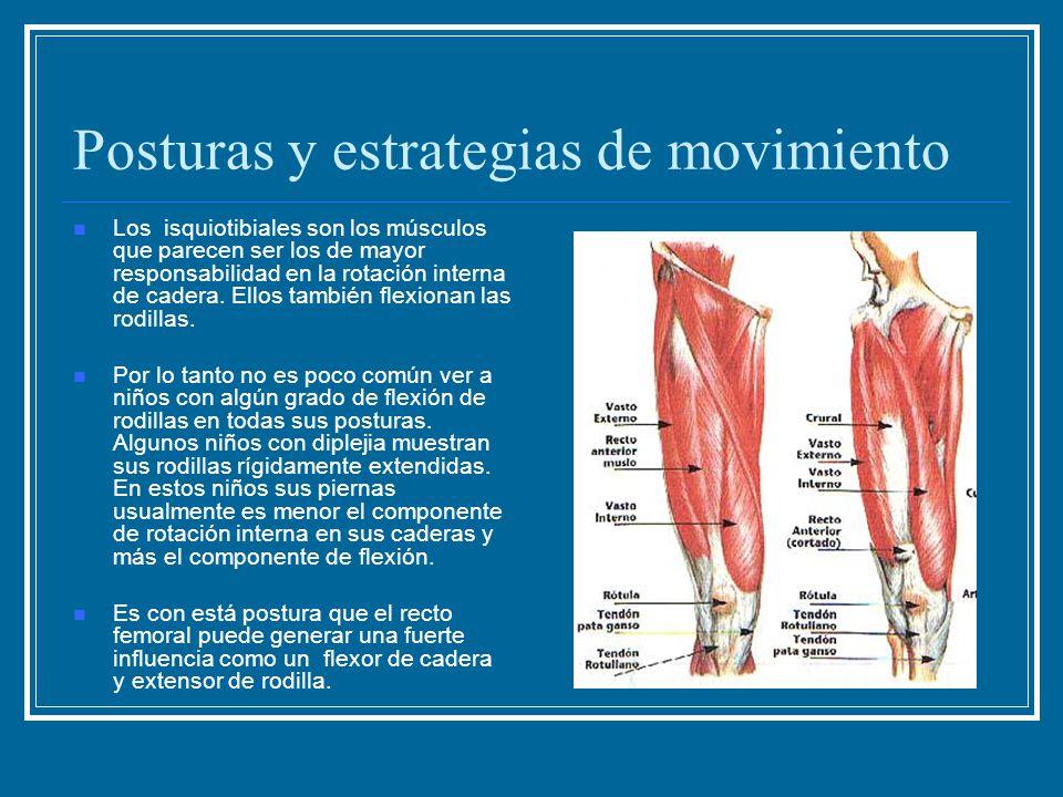 Posturas y estrategias de movimiento Los isquiotibiales son los músculos que parecen ser los de mayor responsabilidad en la rotación interna de cadera