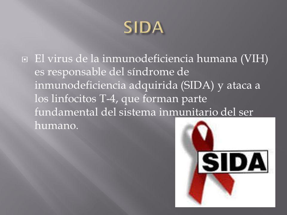  El virus de la inmunodeficiencia humana (VIH) es responsable del síndrome de inmunodeficiencia adquirida (SIDA) y ataca a los linfocitos T-4, que forman parte fundamental del sistema inmunitario del ser humano.