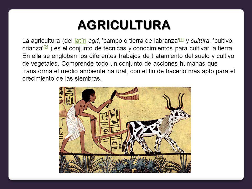 La agricultura (del latín agri, campo o tierra de labranza [1] y cultūra, cultivo, crianza [2] ) es el conjunto de técnicas y conocimientos para cultivar la tierra.
