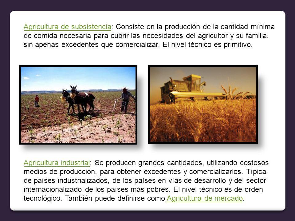 Agricultura de subsistenciaAgricultura de subsistencia: Consiste en la producción de la cantidad mínima de comida necesaria para cubrir las necesidades del agricultor y su familia, sin apenas excedentes que comercializar.