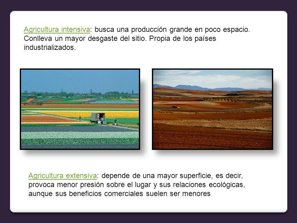 Agricultura intensivaAgricultura intensiva: busca una producción grande en poco espacio.