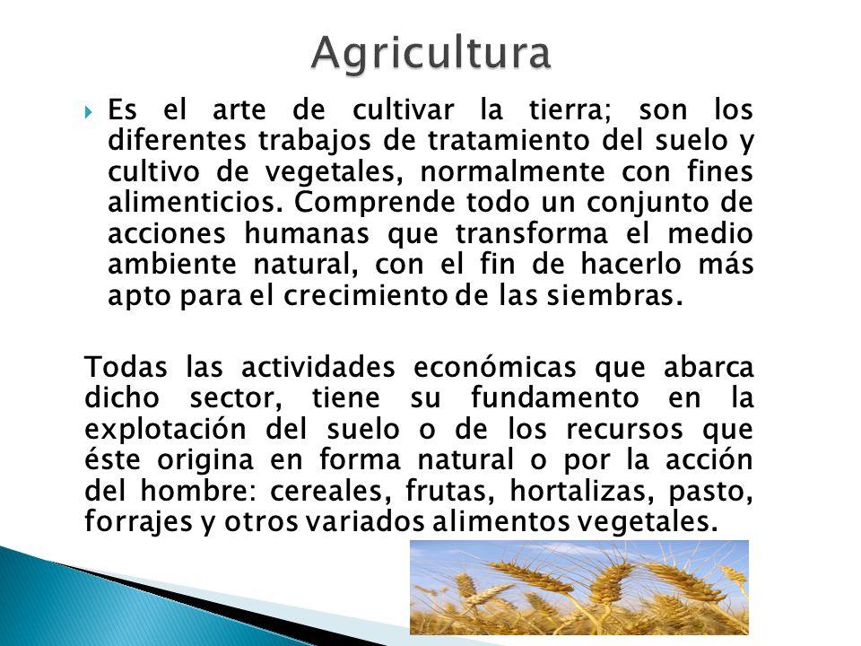  Es el arte de cultivar la tierra; son los diferentes trabajos de tratamiento del suelo y cultivo de vegetales, normalmente con fines alimenticios.