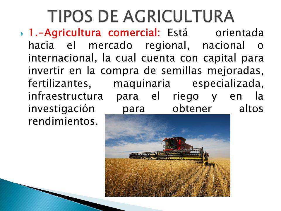 1.-Agricultura comercial: Está orientada hacia el mercado regional, nacional o internacional, la cual cuenta con capital para invertir en la compra de semillas mejoradas, fertilizantes, maquinaria especializada, infraestructura para el riego y en la investigación para obtener altos rendimientos.