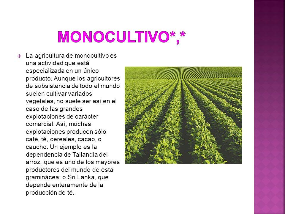  La agricultura de monocultivo es una actividad que está especializada en un único producto.