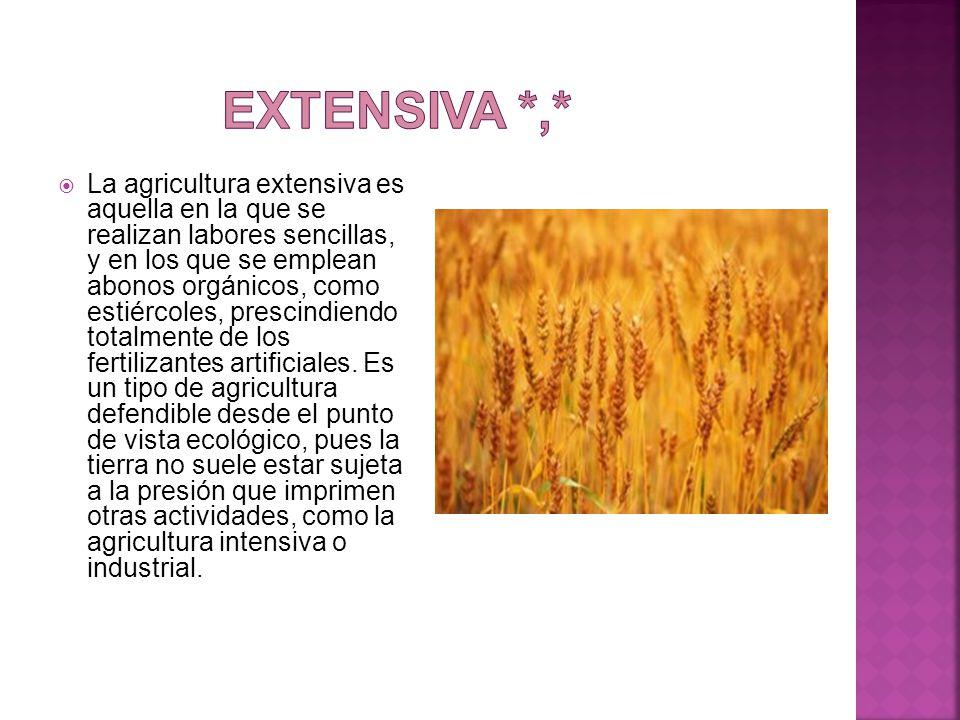  La agricultura extensiva es aquella en la que se realizan labores sencillas, y en los que se emplean abonos orgánicos, como estiércoles, prescindiendo totalmente de los fertilizantes artificiales.