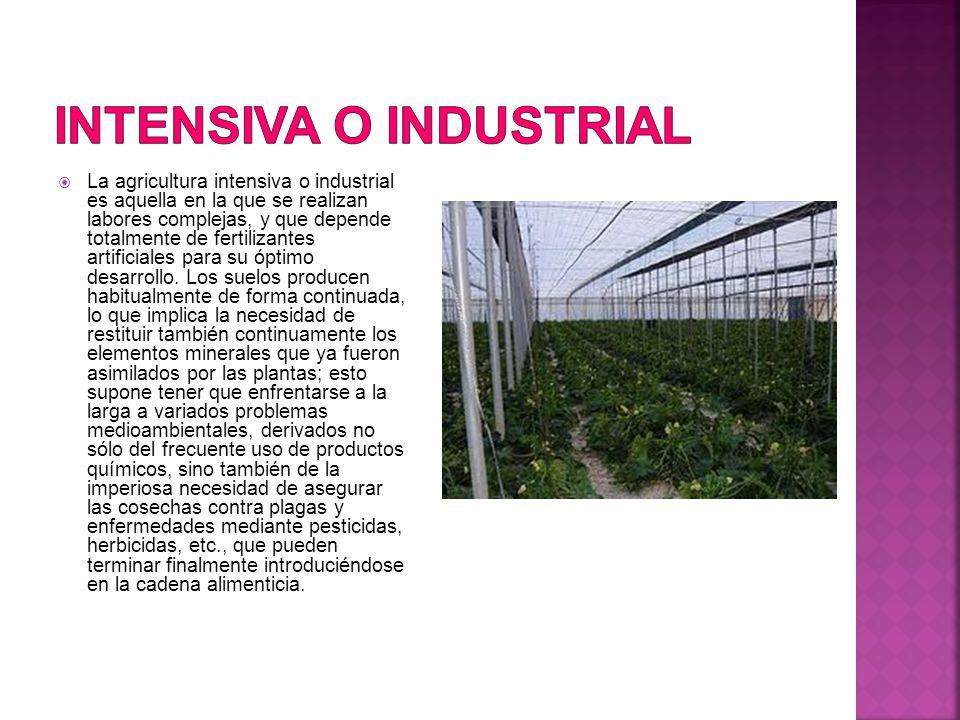  La agricultura intensiva o industrial es aquella en la que se realizan labores complejas, y que depende totalmente de fertilizantes artificiales para su óptimo desarrollo.