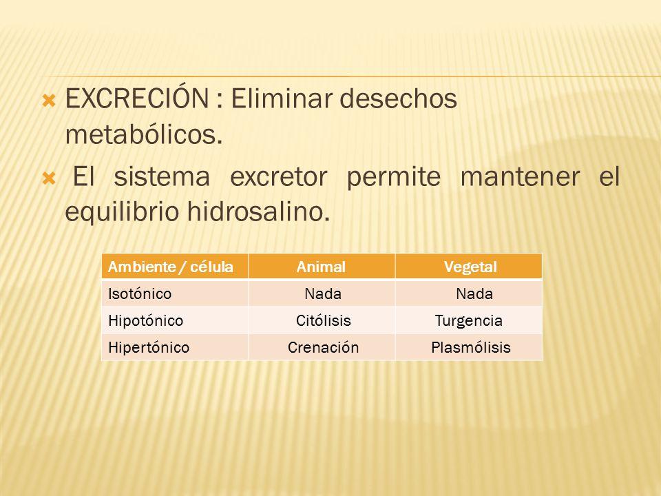  EXCRECIÓN : Eliminar desechos metabólicos.