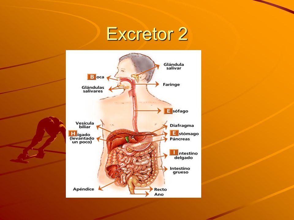 Excretor 1