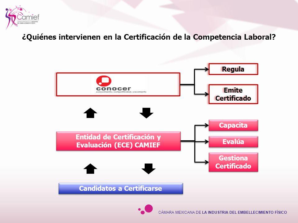 CÁMARA MEXICANA DE LA INDUSTRIA DEL EMBELLECIMIENTO FÍSICO Plan de Evaluación Plan de Evaluación Emisión del certificado de CL Recopilación de Evidencias: Desempeño, Productos, Conocimientos Recopilación de Evidencias: Desempeño, Productos, Conocimientos Dictamen de la procedencia de la certificación Continúa con el Proceso Todavía no Competente Competente Entrega de certificado Entrega de certificado ResultadoResultado Diagnóstico Capacitación Emisión del juicio de competencia Emisión del juicio de competencia Requiere Capacitación – ejercitación, etc.