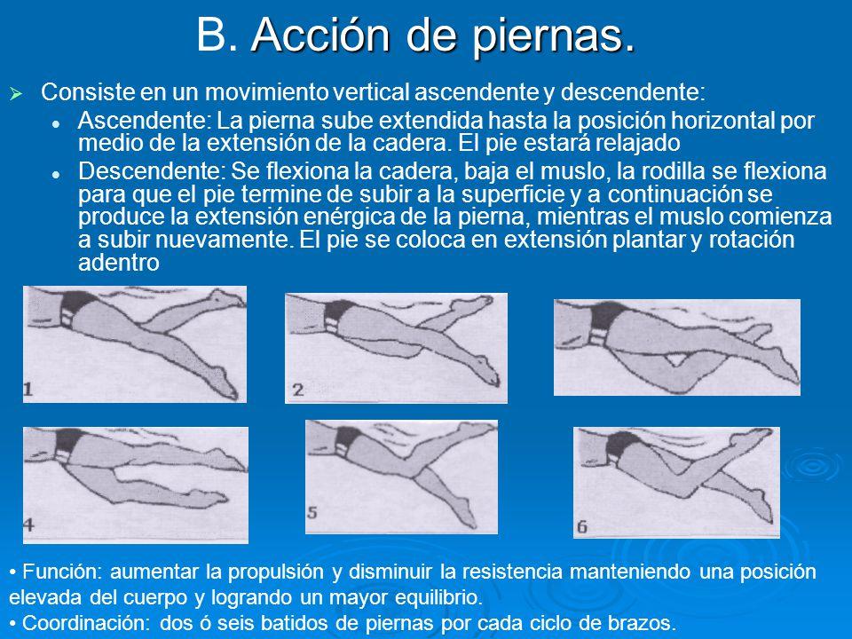   Consiste en un movimiento vertical ascendente y descendente: Ascendente: La pierna sube extendida hasta la posición horizontal por medio de la ext