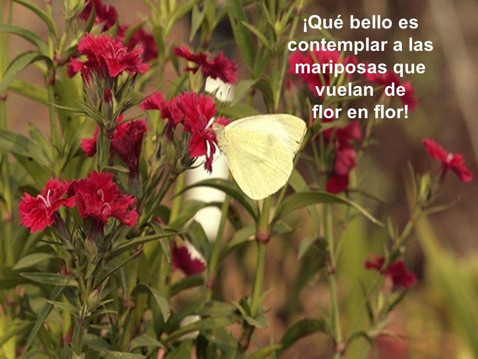 Qué bello es contemplar las flores y aspirar su fragancia en los ratos de nuestra vejez