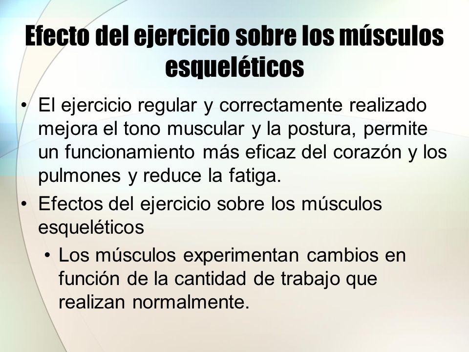 Efecto del ejercicio sobre los músculos esqueléticos El ejercicio regular aumenta el tamaño de los músculos, proceso denominado hipertrofia