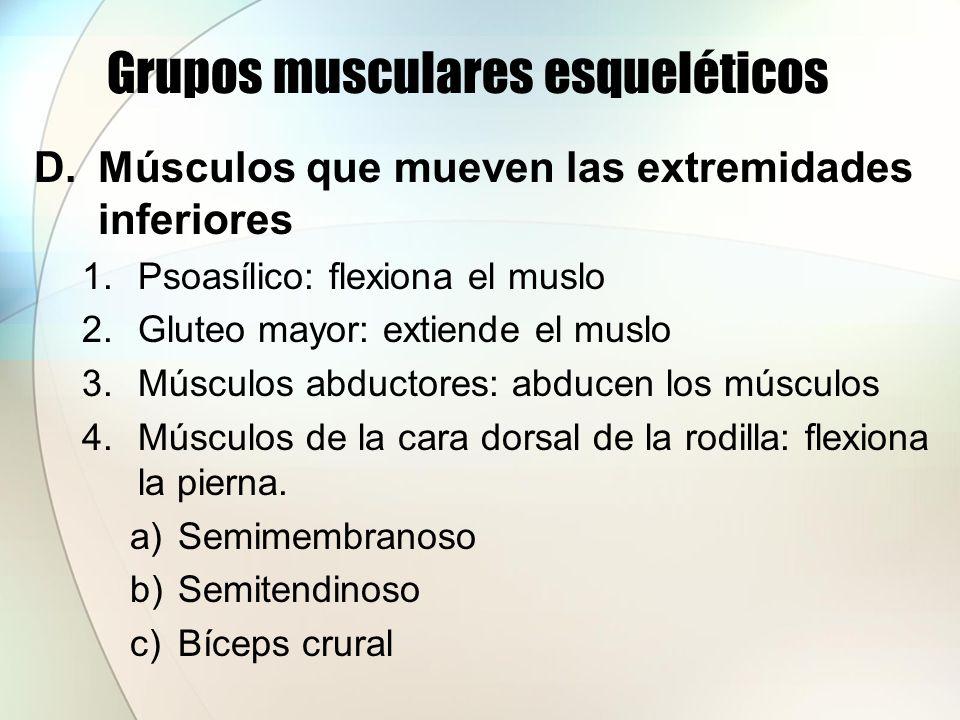 Grupos musculares esqueléticos 5.Grupos cuádriceps crural: extiende la pierna a)Recto anterior del muslo b)Vastos interno y externo c)Crural 6.Tibial anterior : dorsiflexión del pie 7.Gastrocnemio: flexionan el pie 8.Grupo peroneo: flexiona el pie