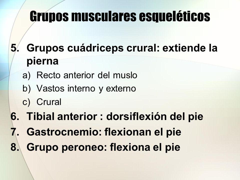 Tipos de movimientos producidos por las contracciones de los músculos esquéleticos Flexión: movimiento que disminuye el ángulo entre dos huesos en la articulación Extensión: movimiento que aumenta el ángulo entre dos huesos en la articulación.