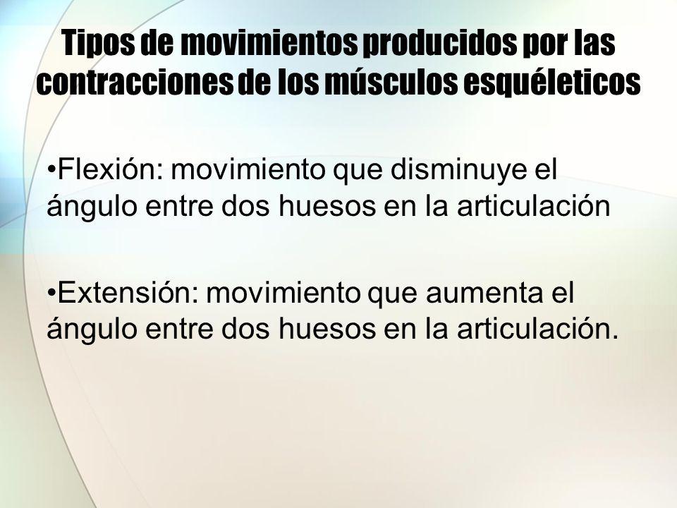 Tipos de movimientos producidos por las contracciones de los músculos esquéleticos Flexión: movimiento que disminuye el ángulo entre dos huesos en la