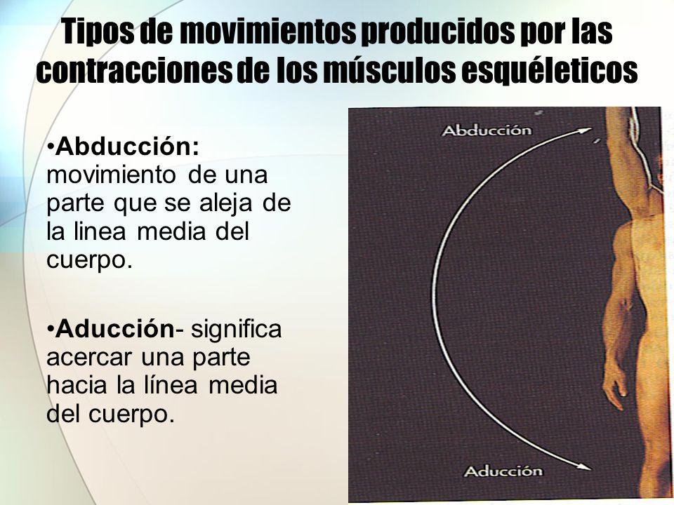 Tipos de movimientos producidos por las contracciones de los músculos esquéleticos Rotación: movimiento alrededor de un eje longitudinal.