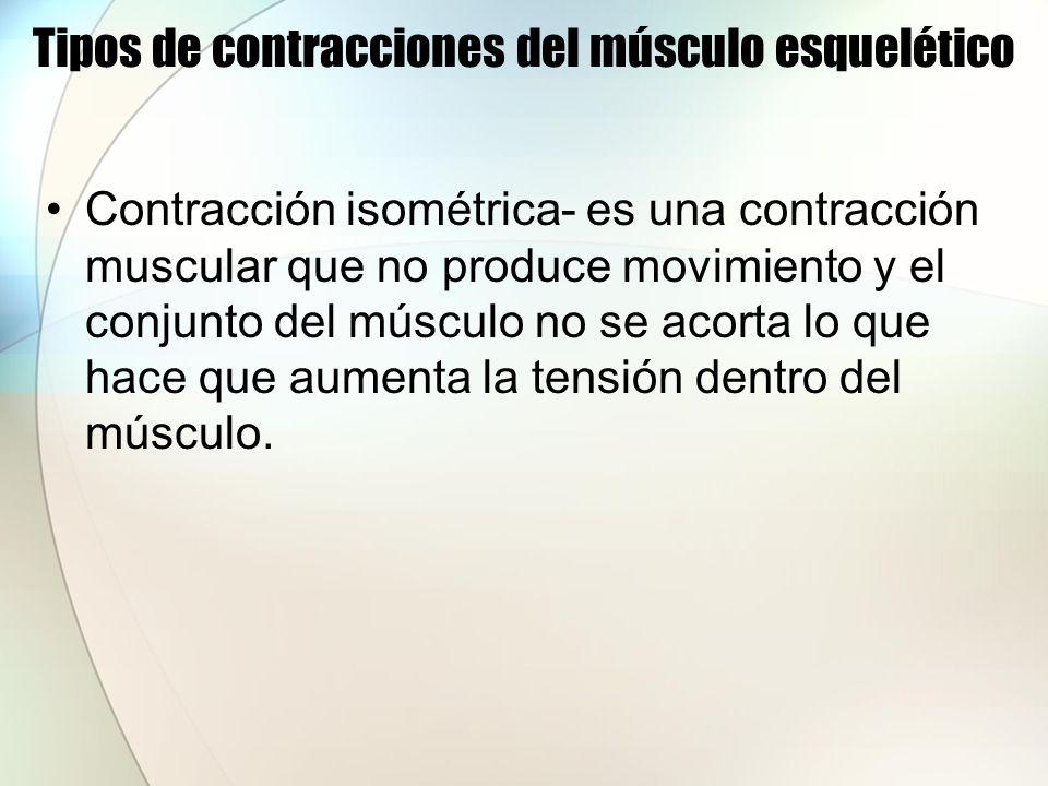 Tipos de contracciones del músculo esquelético Contracción isométrica- es una contracción muscular que no produce movimiento y el conjunto del músculo