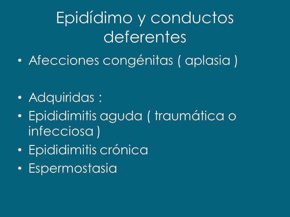 Epidídimo y conductos deferentes Afecciones congénitas ( aplasia ) Adquiridas : Epididimitis aguda ( traumática o infecciosa ) Epididimitis crónica Es