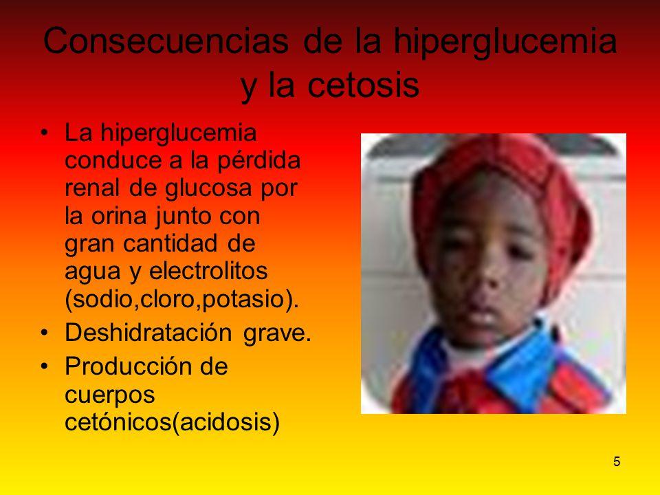 5 Consecuencias de la hiperglucemia y la cetosis La hiperglucemia conduce a la pérdida renal de glucosa por la orina junto con gran cantidad de agua y