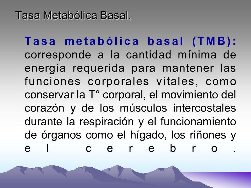 Tasa Metabólica Basal. Tasa metabólica basal (TMB): corresponde a la cantidad mínima de energía requerida para mantener las funciones corporales vital