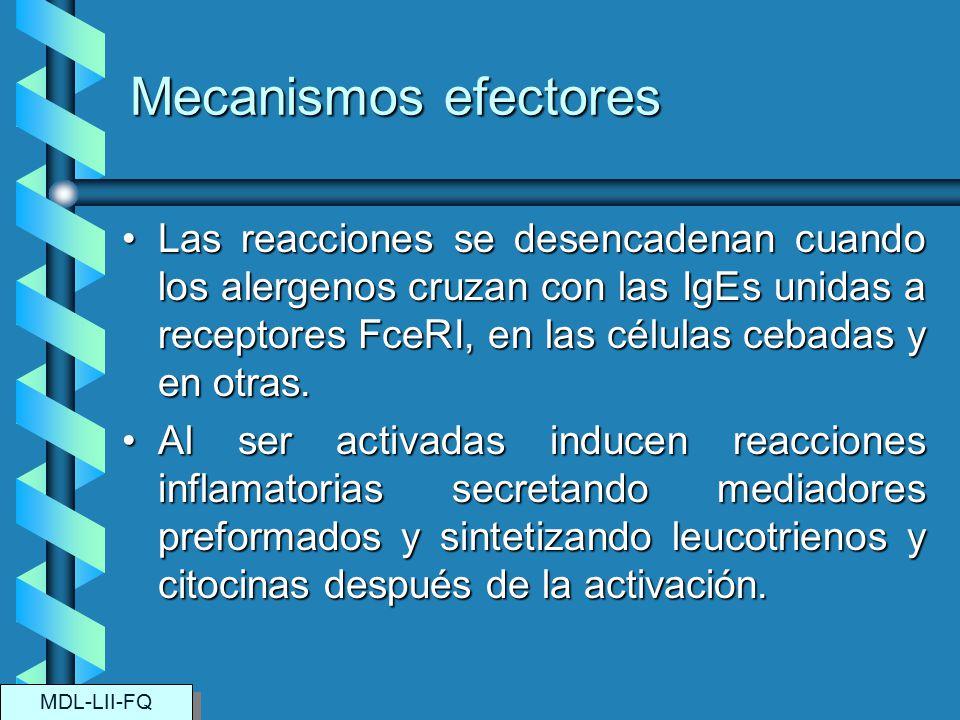 Mecanismos efectores Las reacciones se desencadenan cuando los alergenos cruzan con las IgEs unidas a receptores FceRI, en las células cebadas y en ot