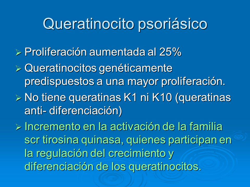 Queratinocito psoriásico  Proliferación aumentada al 25%  Queratinocitos genéticamente predispuestos a una mayor proliferación.  No tiene queratina