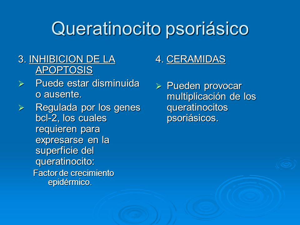 Queratinocito psoriásico 3. INHIBICION DE LA APOPTOSIS  Puede estar disminuida o ausente.  Regulada por los genes bcl-2, los cuales requieren para e