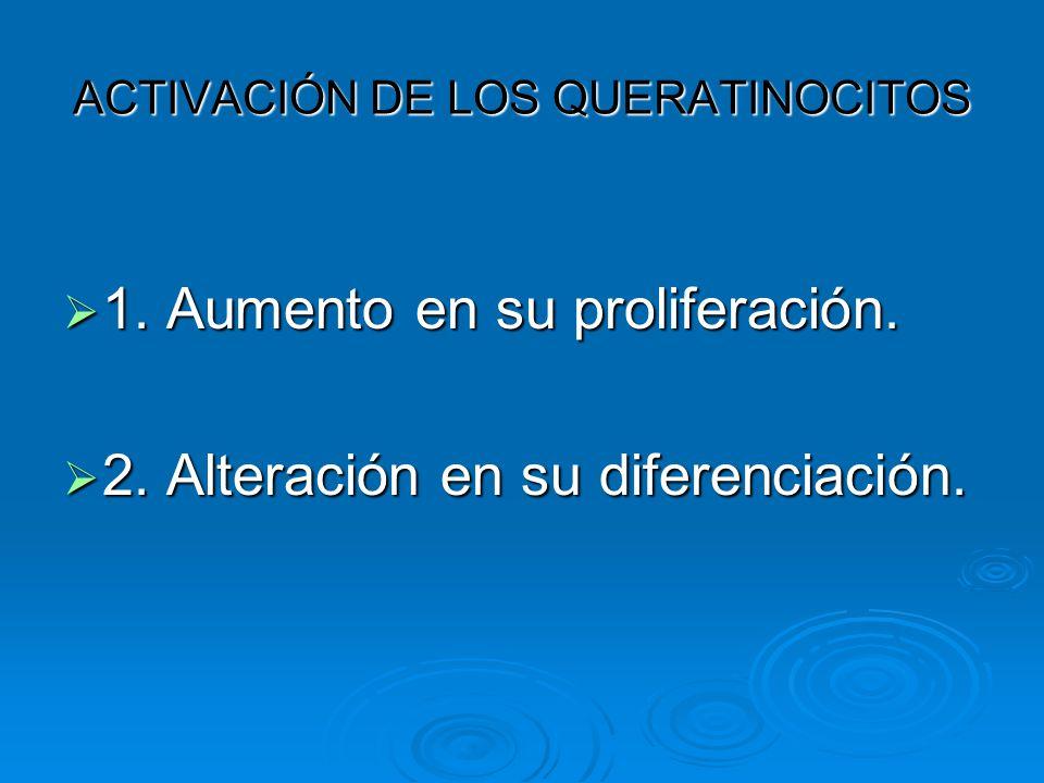 ACTIVACIÓN DE LOS QUERATINOCITOS  1. Aumento en su proliferación.  2. Alteración en su diferenciación.