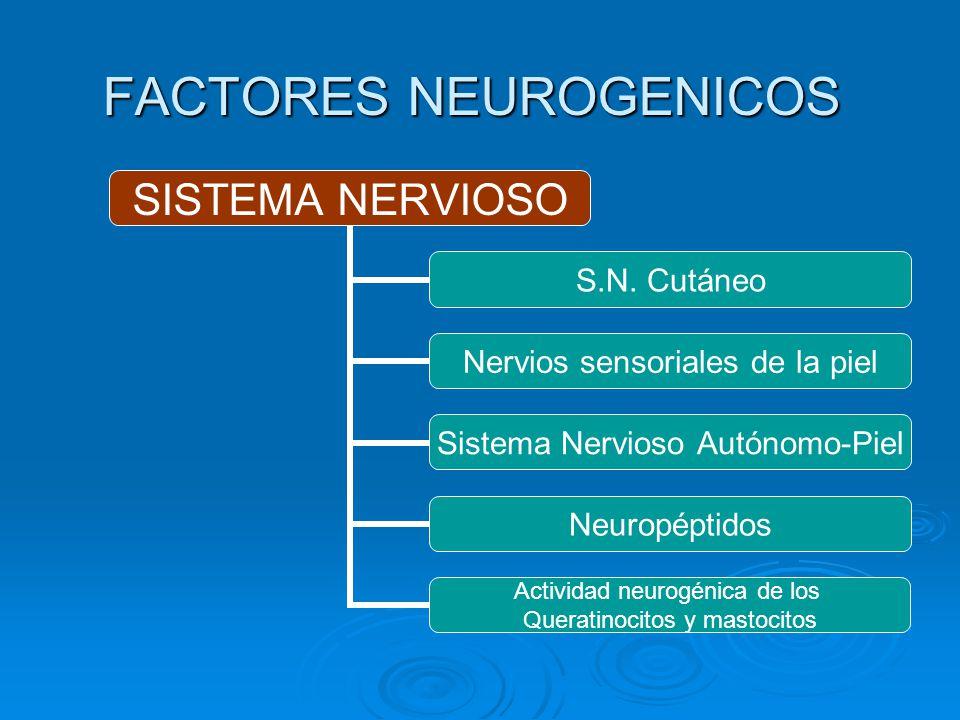 FACTORES NEUROGENICOS SISTEMA NERVIOSO S.N. Cutáneo Nervios sensoriales de la piel Sistema Nervioso Autónomo-Piel Neuropéptidos Actividad neurogénica