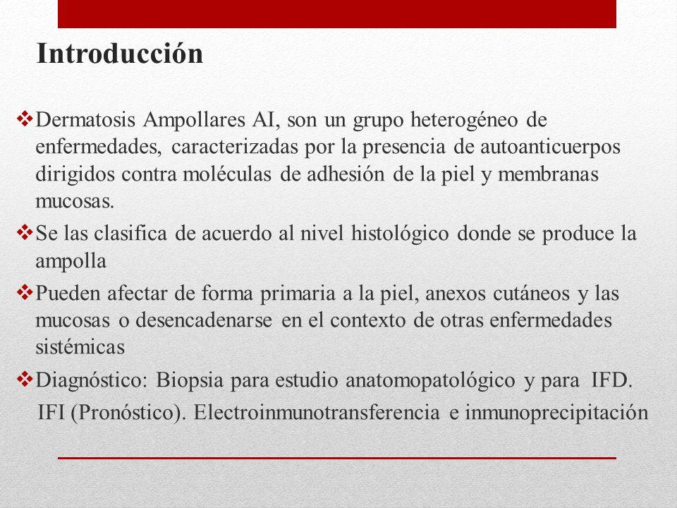 Introducción  Dermatosis Ampollares AI, son un grupo heterogéneo de enfermedades, caracterizadas por la presencia de autoanticuerpos dirigidos contra moléculas de adhesión de la piel y membranas mucosas.