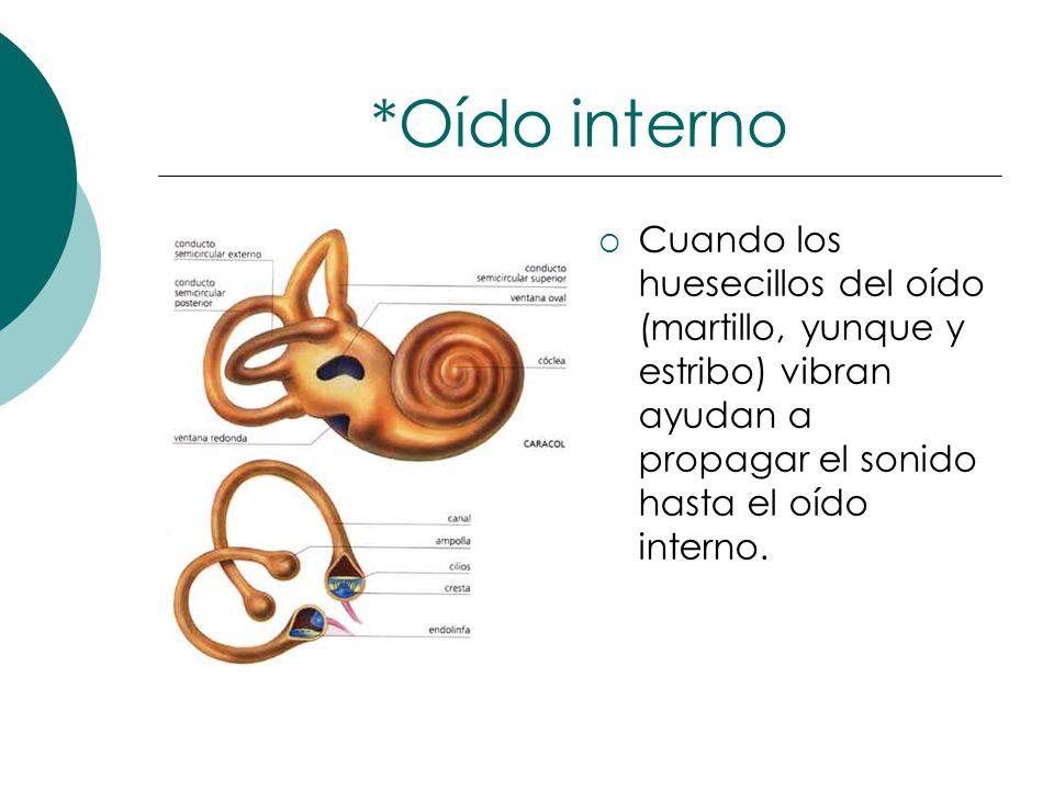 Increíble Huesos Del Oído Interno Friso - Anatomía de Las ...