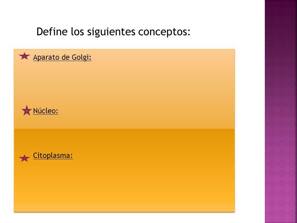  No tiene pared celular (membrana celulósica)  Presentan diversas formas de acuerdo con su función.