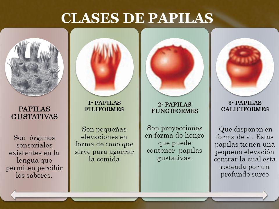 Stepfanie Yohana González Carrascal Biología ppt descargar
