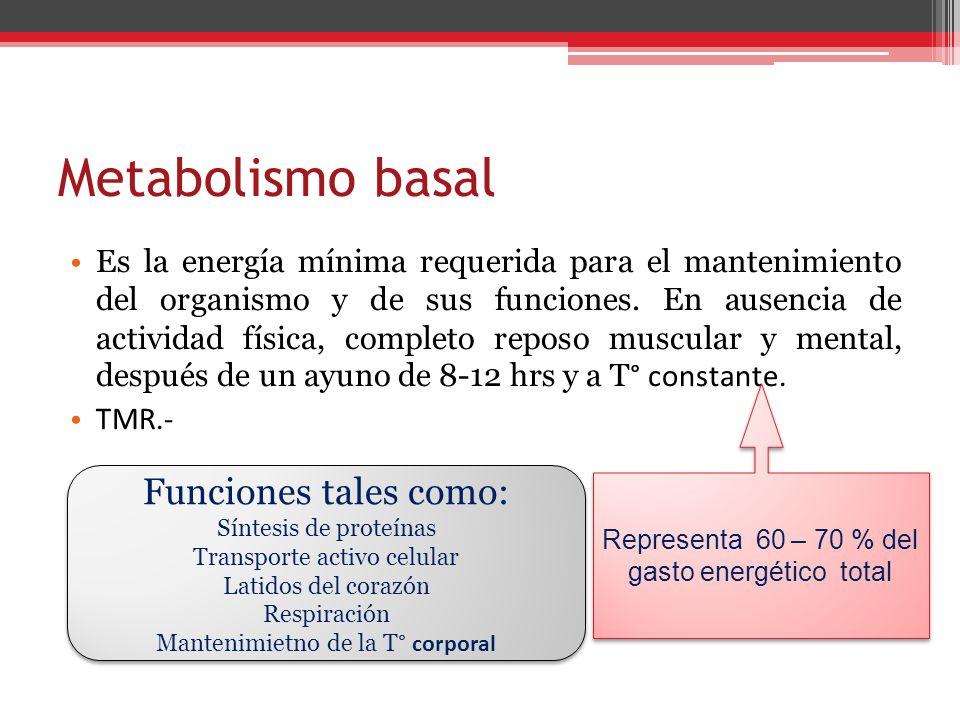 Metabolismo basal Es la energía mínima requerida para el mantenimiento del organismo y de sus funciones. En ausencia de actividad física, completo rep