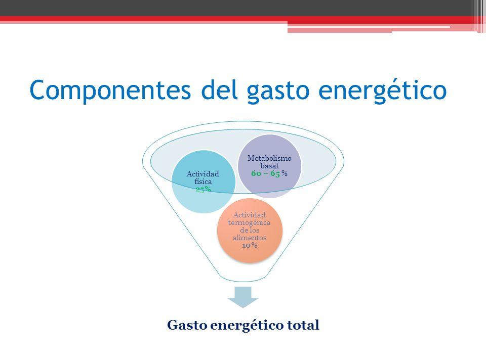 Componentes del gasto energético Gasto energético total Actividad termogénica de los alimentos 10% Actividad física 25% Metabolismo basal 60 – 65 %