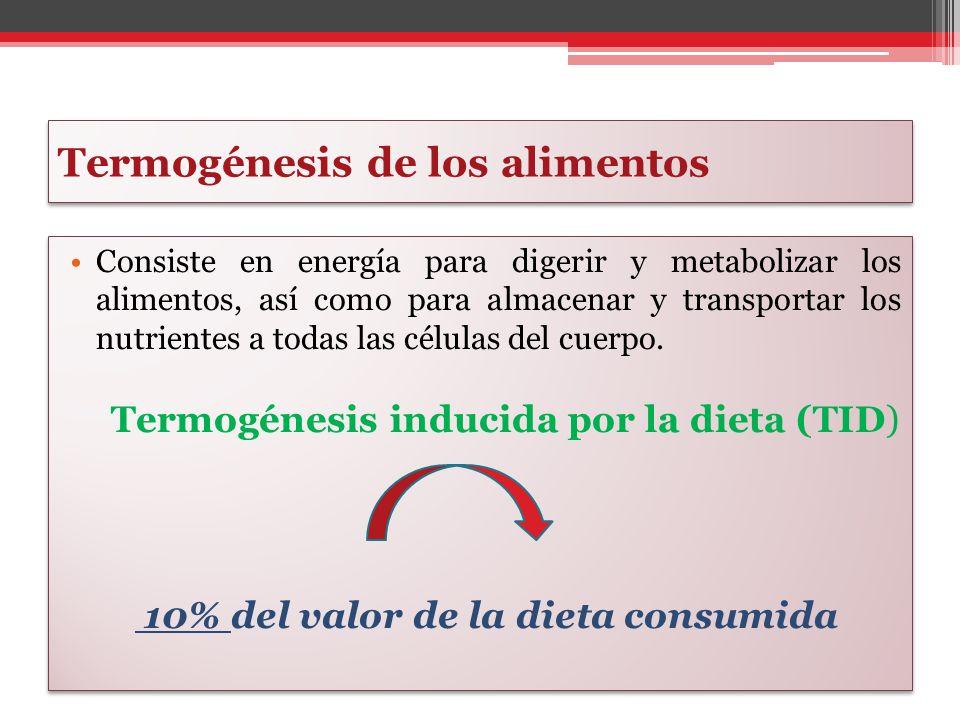 Termogénesis de los alimentos Consiste en energía para digerir y metabolizar los alimentos, así como para almacenar y transportar los nutrientes a tod