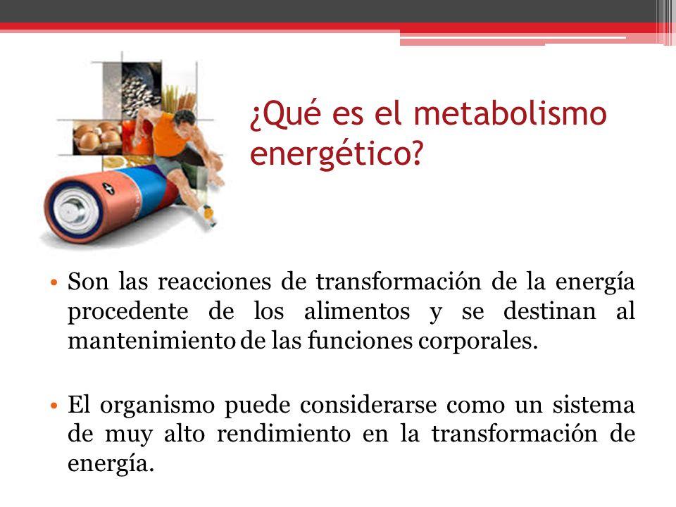 ¿Qué es el metabolismo energético? Son las reacciones de transformación de la energía procedente de los alimentos y se destinan al mantenimiento de la