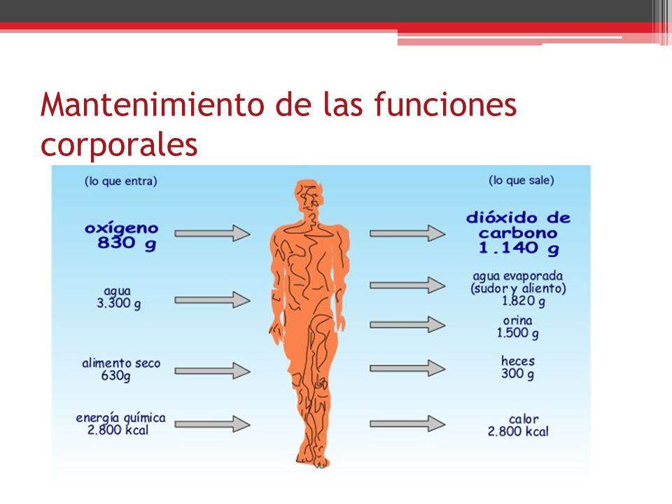 Mantenimiento de las funciones corporales