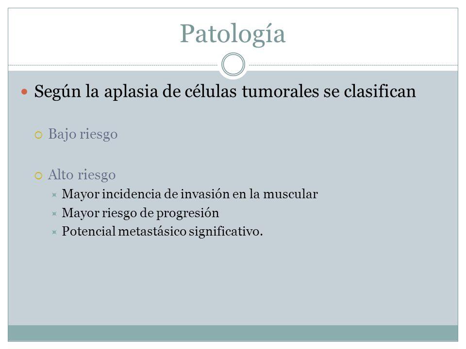 Patología Según la aplasia de células tumorales se clasifican  Bajo riesgo  Alto riesgo  Mayor incidencia de invasión en la muscular  Mayor riesgo