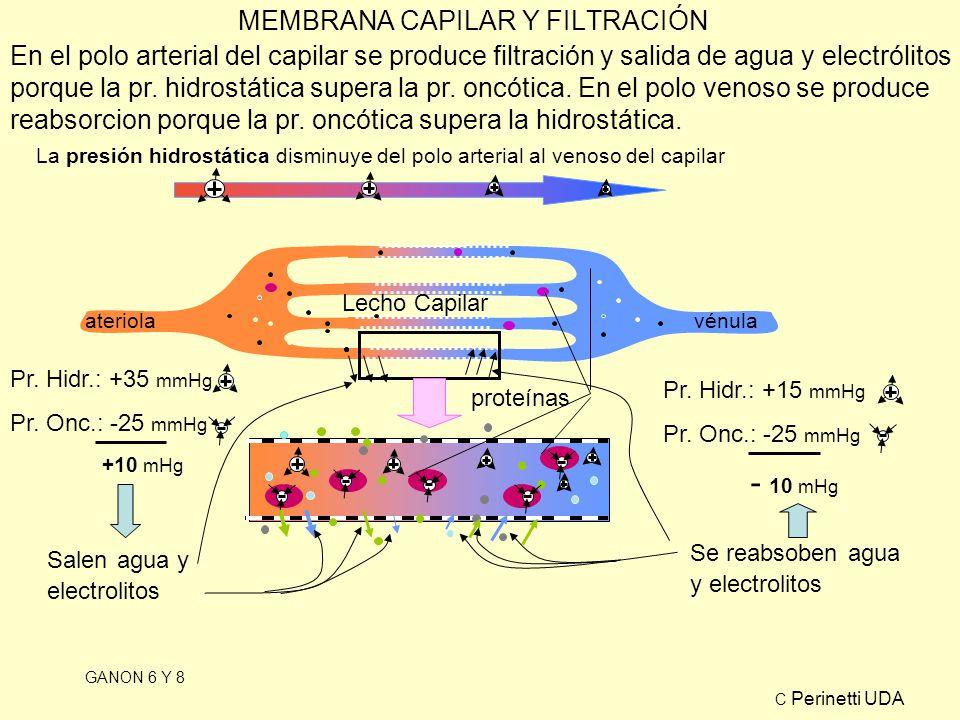 MEMBRANA CAPILAR Y FILTRACIÓN GANON 6 Y 8 Lecho Capilar ateriolavénula proteínas La presión hidrostática disminuye del polo arterial al venoso del capilar Pr.