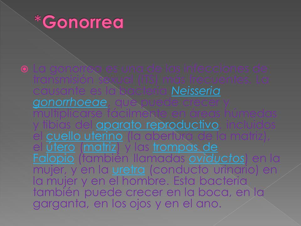 La gonorrea es una de las infecciones de transmisión sexual (ITS) más frecuentes. La causante es la bacteria Neisseria gonorrhoeae, que puede crecer