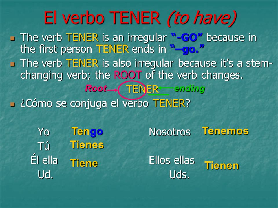 El verbo TENER (to have) The verb TENER is an irregular -GO because in the first person TENER ends in –go. The verb TENER is an irregular -GO because in the first person TENER ends in –go. The verb TENER is also irregular because it's a stem- changing verb; the ROOT of the verb changes.