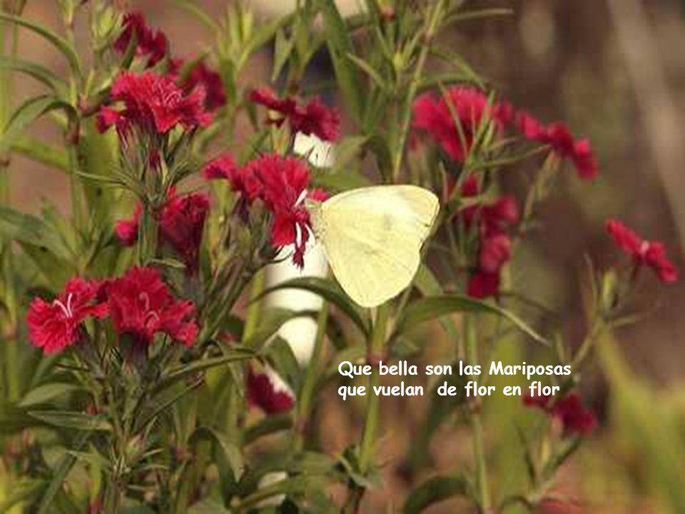 Que bello es contemplar las flores y aspirar su fragancia en los ratos de nuestra vejez